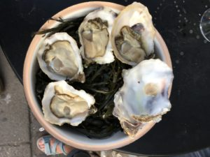 åbne østers